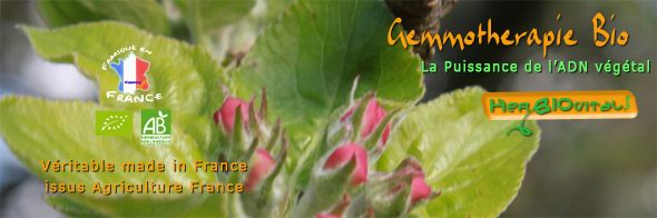 la gemmotherapie bourgeons bio classes en francais et en latin